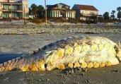 八大神兽:海滩神秘尸体和吸血怪兽