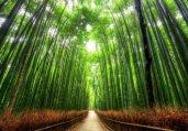 此景只因天上有!全球十大最美树隧道