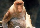 大跌眼镜!盘点世上最丑陋的20种动物