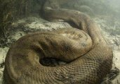 度假岛上一保安竟被4米长的巨蟒给活活勒死