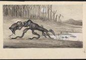 藏身在澳大利亚的十大神秘怪物揭秘