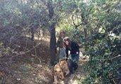 太可怜!动物园爆丑闻 非洲狮被吊死在笼中