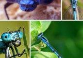 揭秘世间难得一见的十种奇特蓝色动物