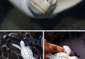 百年难遇!世界七种最罕见的白化动物
