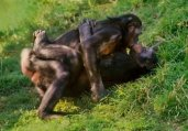 动物界十大奇葩恋:同性间也有真爱!