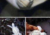 百年难遇!世界上七种最位罕见的白化动物