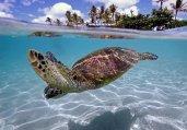 水下世界 奇妙又美丽