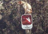 一只狗的行为艺术
