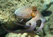 海洋头足类动物的奇特生活