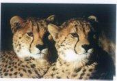 近代灭绝的30种动物