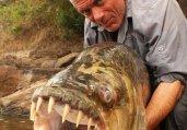 英国勇士河中捕捉到史前巨型吃人鱼怪