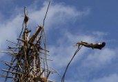 土著人绑藤条从90英尺高空蹦极