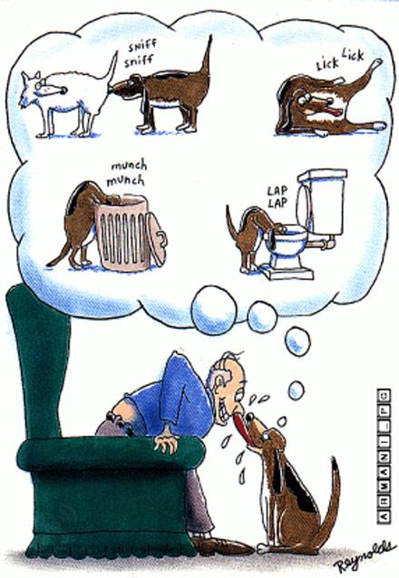 请不要亲你的宠物。。。