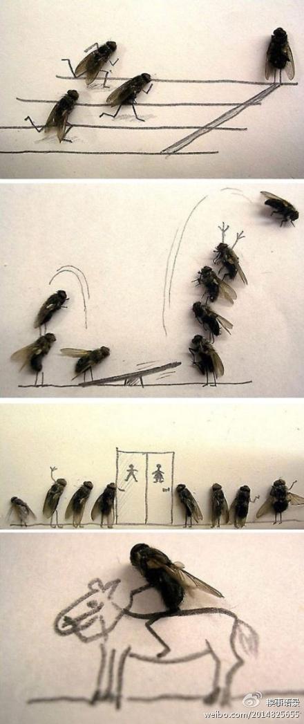苍蝇写真集!!